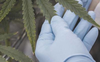 Cannabis Cleanroom Environments & CGMP Guidance